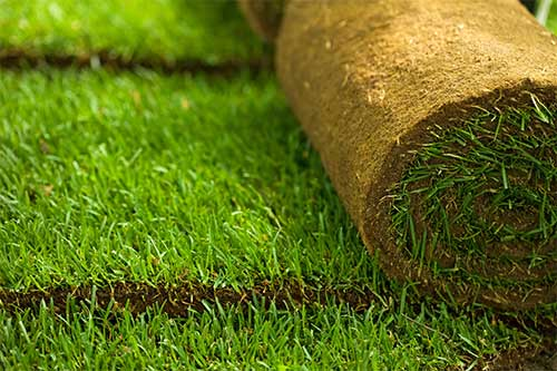 Turf and Synthetic Lawns